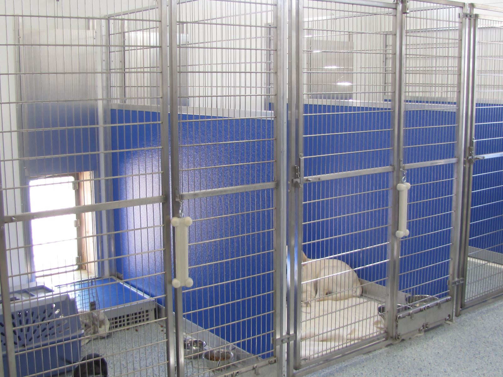 Inside and outside access for your pet