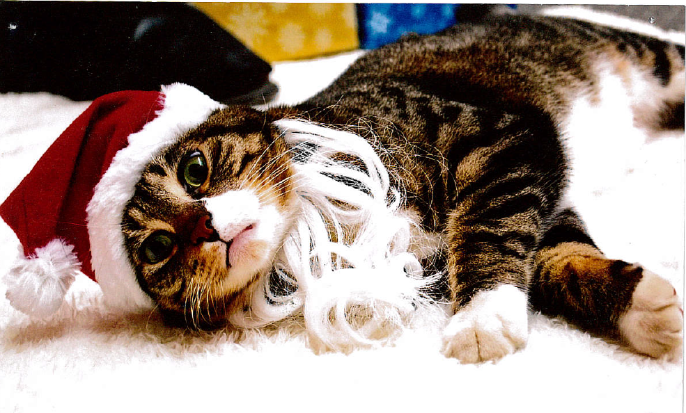 Fun filled Pet Pictures with Santa