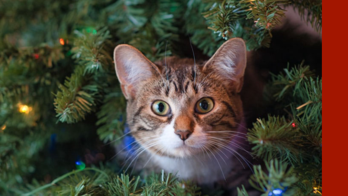 Holiday Hazards Harmful to Pets