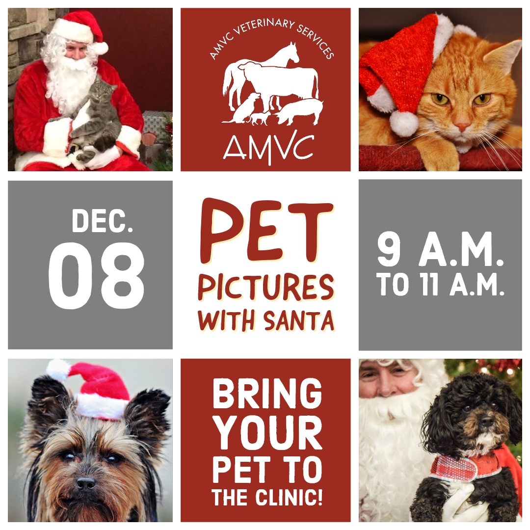 Pet Pictures with Santa 2018